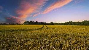 agriculture private equity