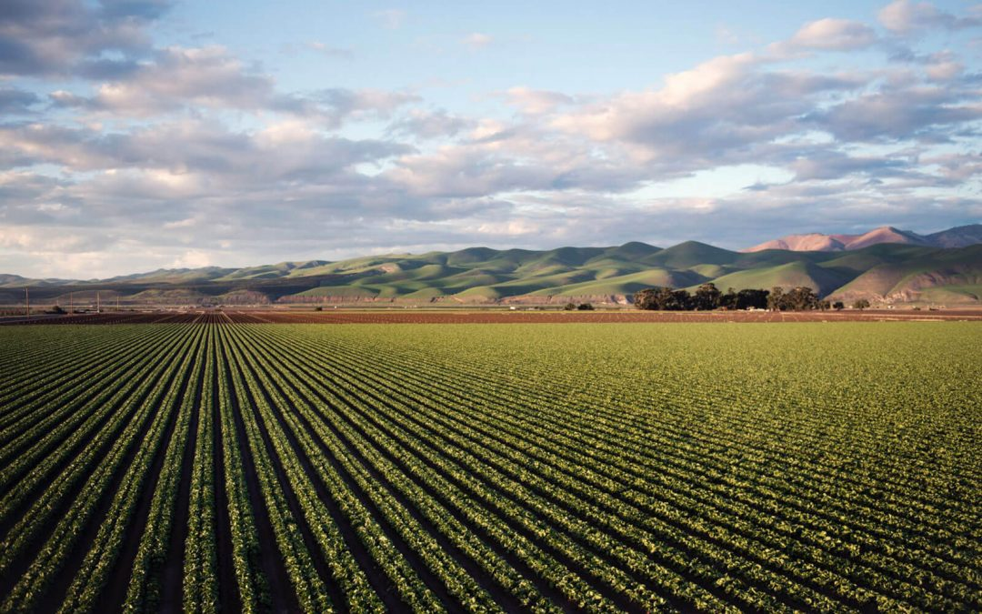 Foreign investment in Australian farmland