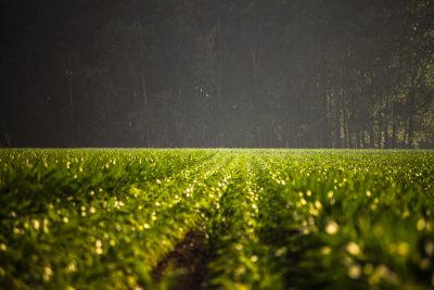 farmland investment company