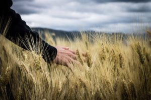 Agricultural business consultant albury and riverina